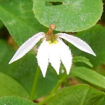 170904 田圃の花 (8)