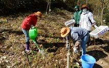 0200425 山野草のエキ アズマイチゲ植え付け (9)