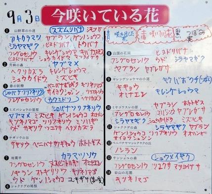 180903 鹿野の山野草のエキ   (27)