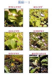 二所山田神社裏庭の花4月初め−1