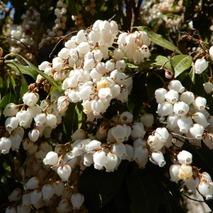 180310 西谷の花  (13)