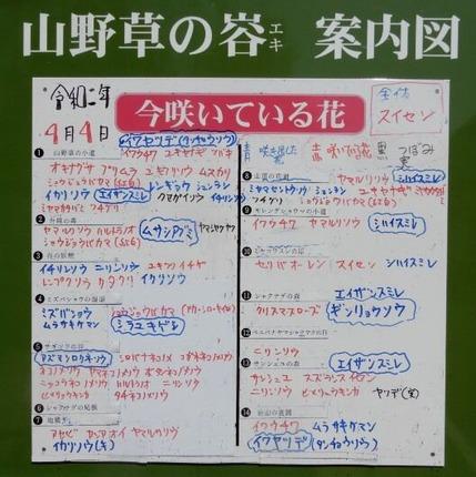 200404 山野草のエキ  (95)