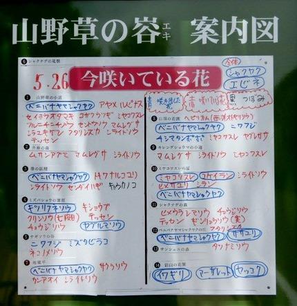 180526 山野草のエキ  (35)-1