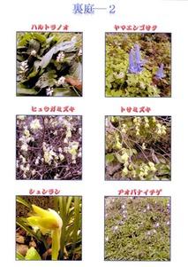 二所山田神社裏庭の花4月初めー2