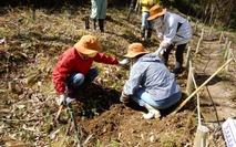 0200425 山野草のエキ アズマイチゲ植え付け (5)