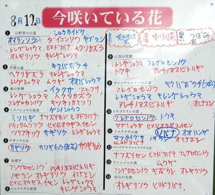 180812 山野草のエキ  (9)