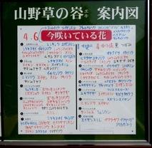 180412 山野草のエキ (4)