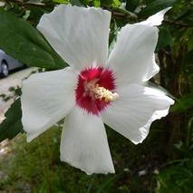 170902 鹿野の花  (20)
