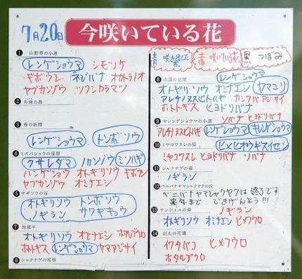 180721 山野草のエキ  (42) -1