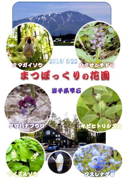 2018・5・22岩手県雫石町まつぼっくりの花園1−1
