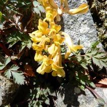 180310 西谷の花  (10)