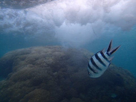 熱帶魚線路浮潛