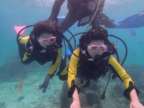 熱帶魚線路體驗潛水