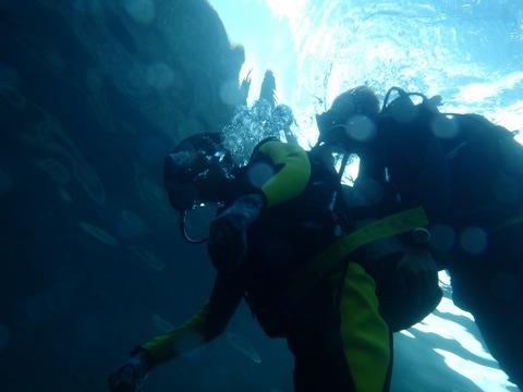 青洞体验潜水