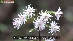 ブログ告知オキナワテイショウソウ