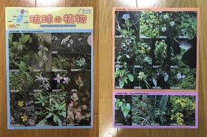 1708A琉球の植物D