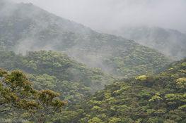 ブログ告知forest