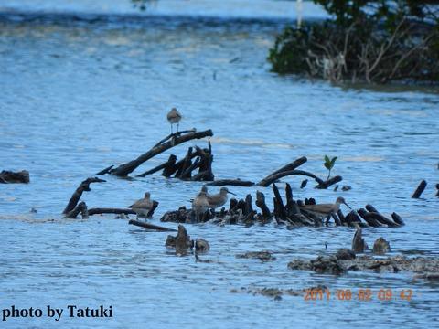 0802水鳥湿地センター (4)