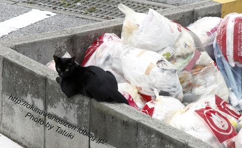 近所のノラ猫