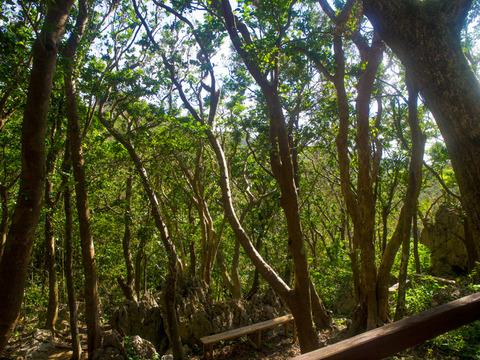 14kaidan_forest_sekirinzan