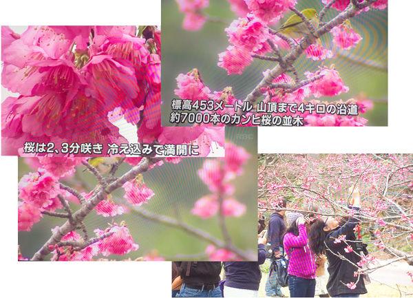 tv_sakura_info05_150118