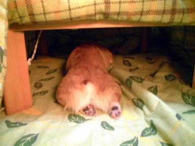 06.01.13_kotatsu