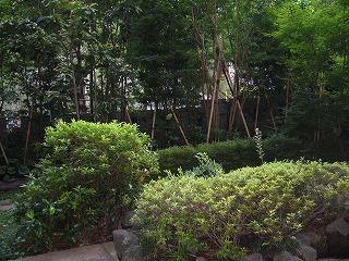 石田健さんのオフィスのお庭