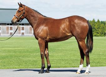 アズールムーンの20 募集馬写真