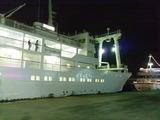 三宅島ドルフィンスイムツアー! 2013年7月13〜15日・23日〜25日