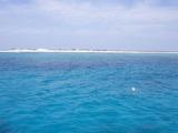 サンゴ DE そのご