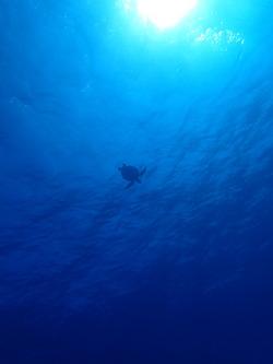 先週は 沖縄へ  行って 行っておりました