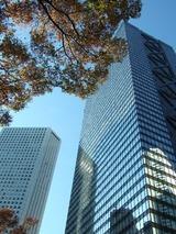 新宿ビルと紅葉