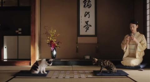 日清ペットフード 懐石 モデル HIROKO 猫 17