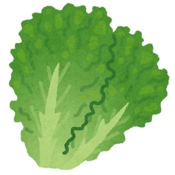 vegetable_green_lettuce