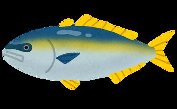 fish_buri2