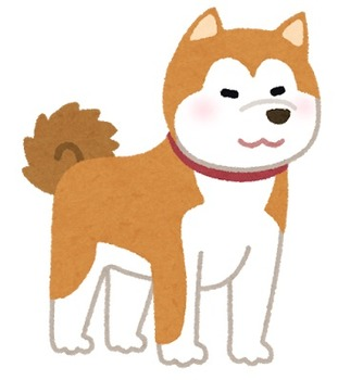 dog_akitainu