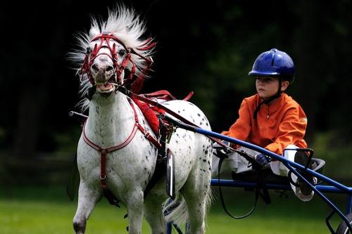 horse-1413604_1280