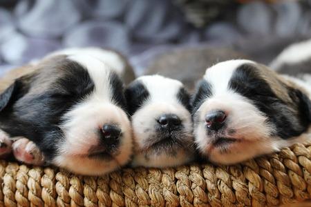puppy-3607024_1280
