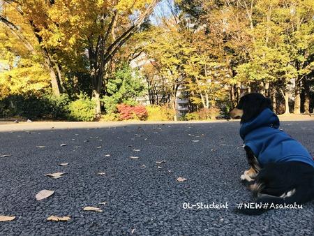 (A.K.A.)Otterくん autumn