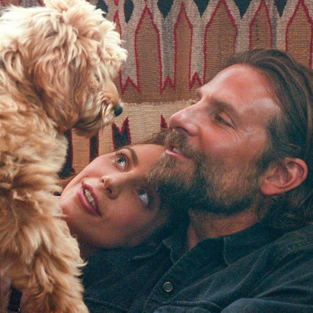 bradley-cooper-star-is-born-dog-1538661550