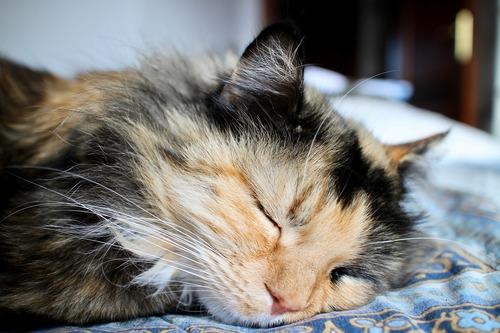 cat-1984267_1280