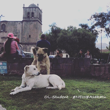 peru doggies cusco