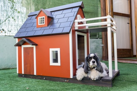 kennels-for-pets-3821861_1280