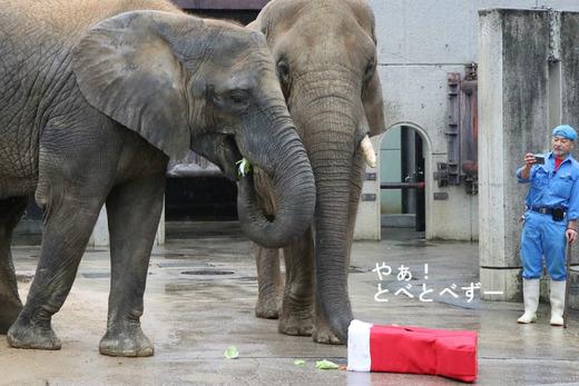 日本で初めて人工哺育で育った媛ちゃんとリカ母さん