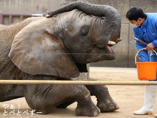 とべ動物園ブログ:砥愛、ティア、タフ、ハヤト