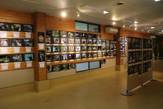 とべ動物園写真コンクール作品展(11/1~11/24開催)
