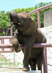 とべ動物園写真コンクール入賞♪ 『お転婆娘の本領発揮♪』