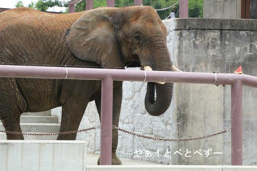 とべ動物園ブログ:媛、ピース、柑太郎、砥々丸、ハヤト、タフ