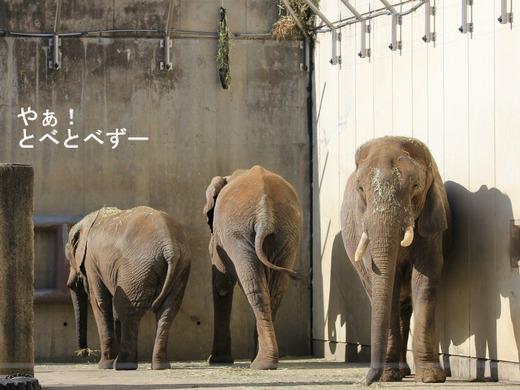 とべ動物園ブログ:媛、ピース、ティア、フー