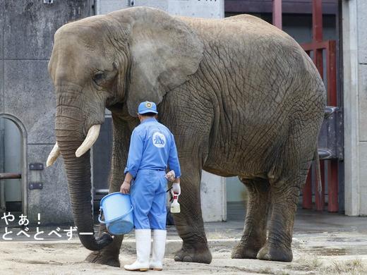 NHK「アフリカゾウの家族をつくる」に登場の椎名さんとリカさん